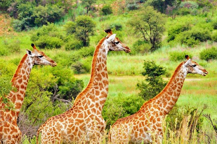 south-africa-pretoria-groenkloof-nature-reserve