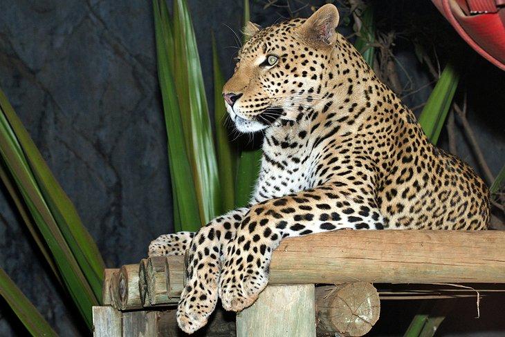 south-africa-pretoria-zoo